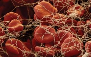Исследование системы крови