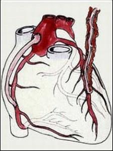 Минуты ортостатической пробы