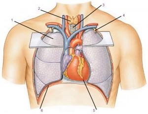 Обжатие грудной клетки