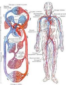 Расстройства кровообращения
